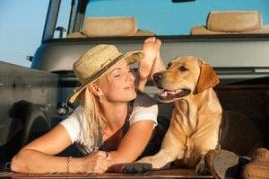 Hund Transportboxen