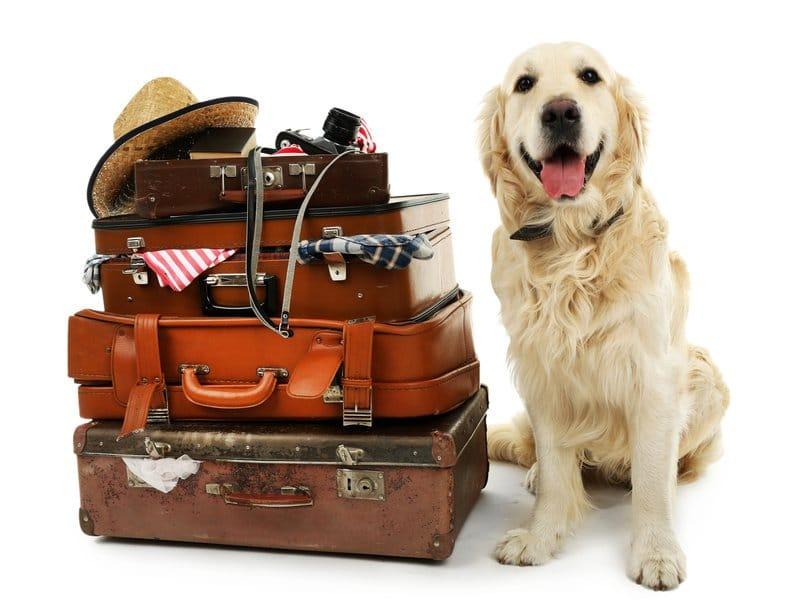 Hundetransportboxen – Tipps für die optimale Hundebox fürs Auto