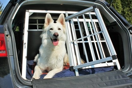 Kofferraumschutz Hund