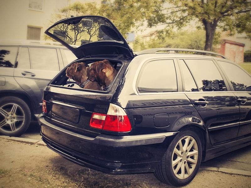 Wie reinige ich einen verschmutzten Kofferraum am besten von Hundehaaren und Hundeschmutz?
