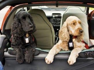 Sicherheitsgeschirr für Hunde im Auto