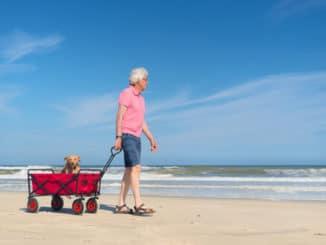 Hundebuggy für Alltag und Urlaub