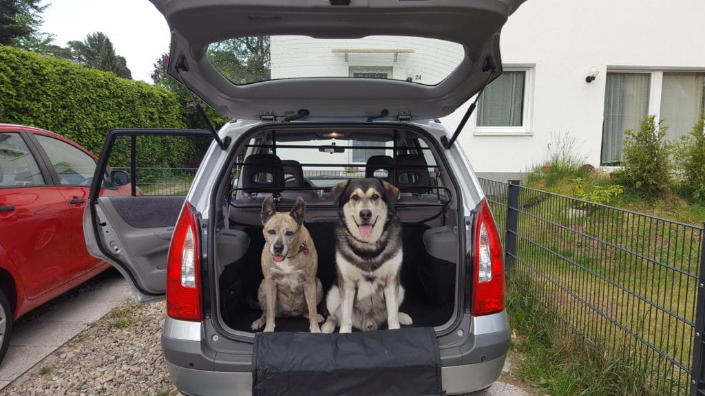 hundegitter f r das auto mit hund sicher im auto. Black Bedroom Furniture Sets. Home Design Ideas