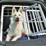 Alu Hundetransportboxen im Überblick