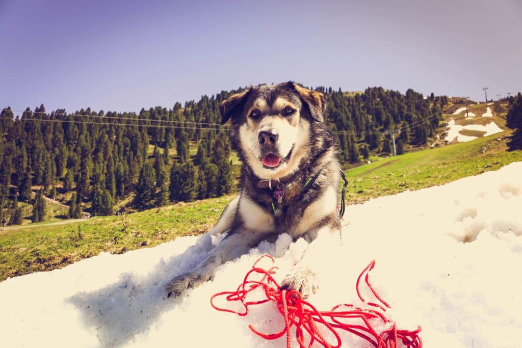 Rosenalm - immer mal wieder findet man kühle schneebedeckte Stellen