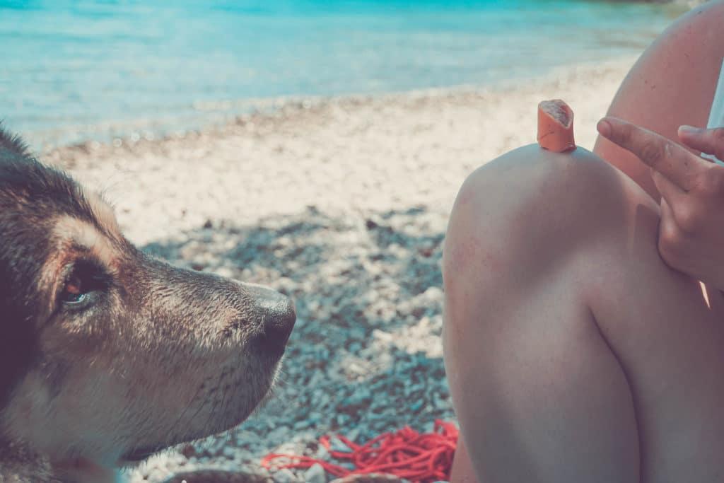 Österreich Achensee mit Hund