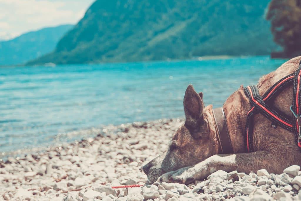 Achensee Österreich mit Hund