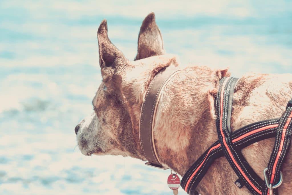 Achsensee mit Hund