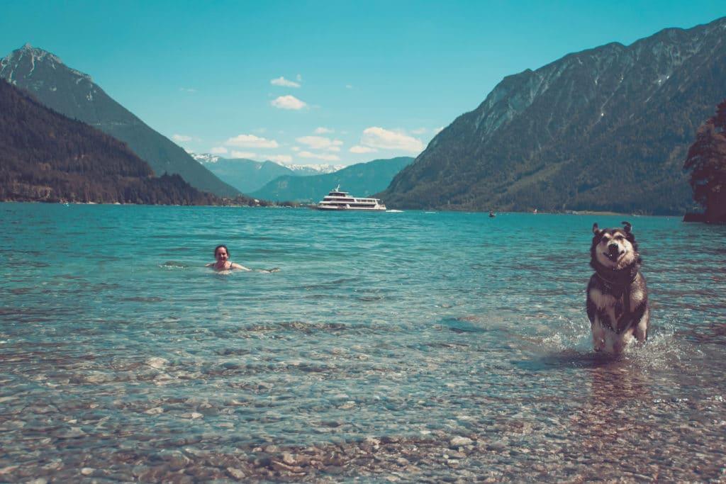 Österreich mit Hund am Achensee