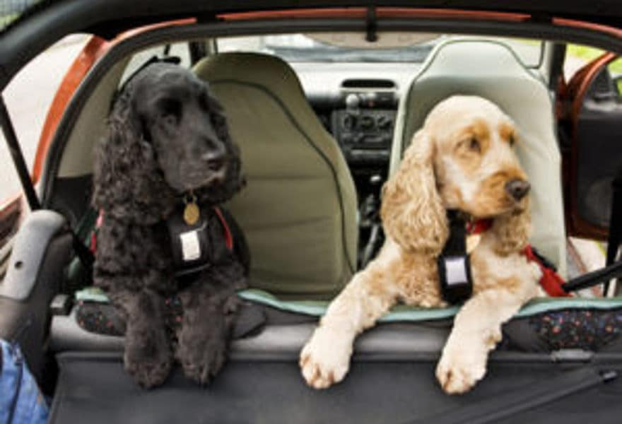 Sicherheitsgeschirre für Hunde im Auto – darauf kommt es an