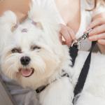 Sicherheitsgurte für den Hund im Auto – sicher unterwegs trotz wenig Platz im Auto