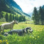 Urlaub mit Hund in Österreich – Reiseziel, Unterkunft, Unternehmungen – unser Reisereport