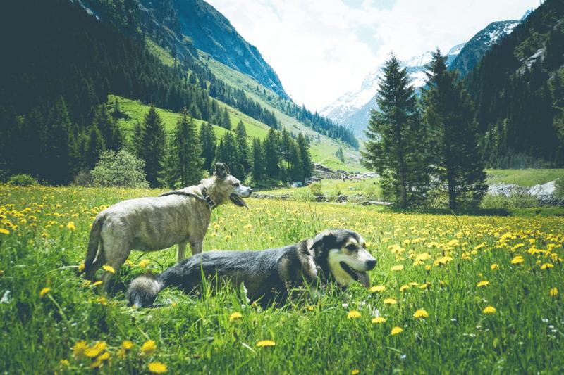 Urlaub-Hund-Oesterreich