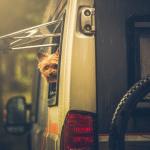 Ein Wohnmobil mit Hund mieten – so findest du das passende Gefährt