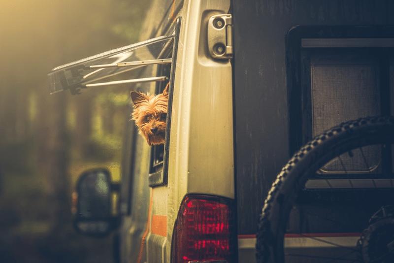 Wohnmobil-mit-Hund